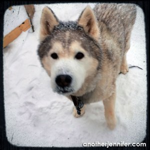 Wordless Wednesday: Snow Dog