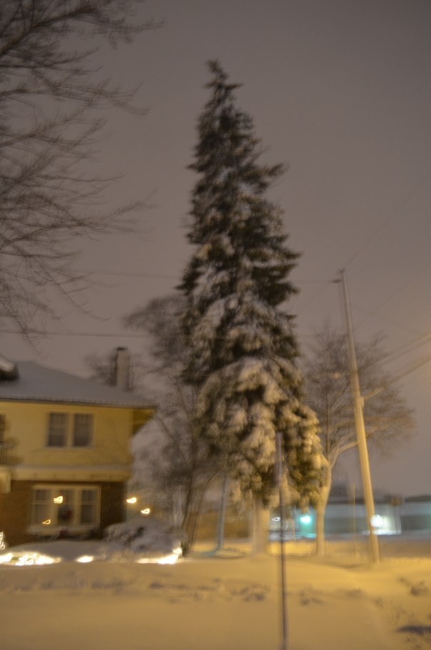 Our almost Seussical looking pine tree