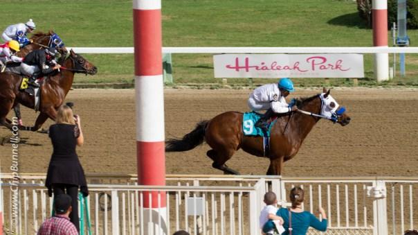 Hialeah Horses_BUNNELL-01052013-48