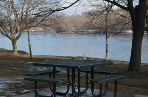 Hard to say what is lonlier, this empty picnic table, or those two geese who didn't get the memo that spring was going to be late this year.