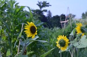 Garden of Plenty 089
