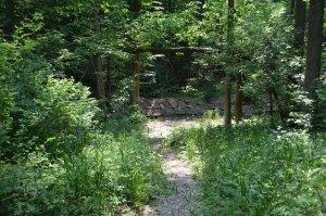 path to creek