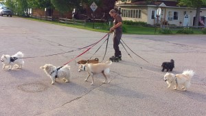 Six dogs on roller blades