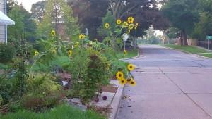 High fiving sun flowers
