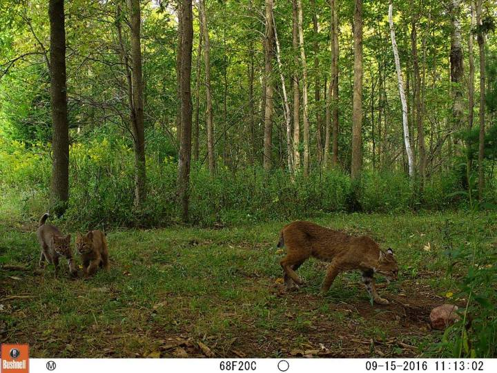 Go instead where there's no path and leave a trail cam