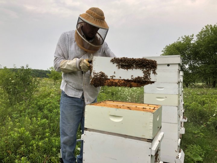 The Secret Life of Beekeepers (Part 1: What's the buzz)