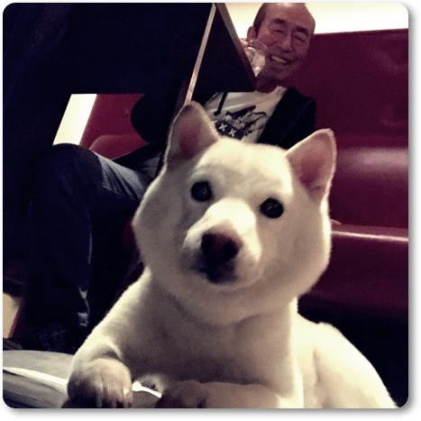 志村けん,愛犬
