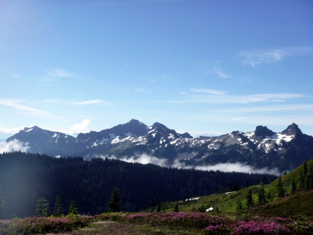 Meadows along the Skyline Loop Trail, looking backwards to the Cascade Range, Mount Rainier National Park, WA