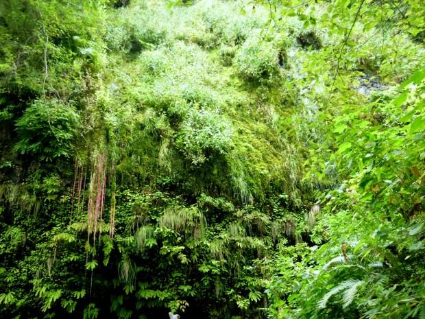 Hanging plants along trail to Multnomah Falls trailhead, Oregon