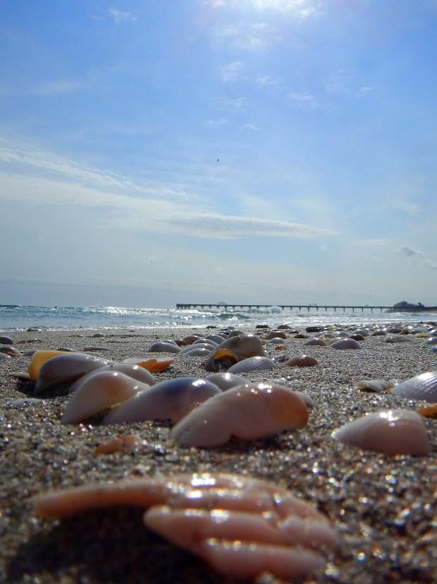 Shells at Juno Beach, Florida