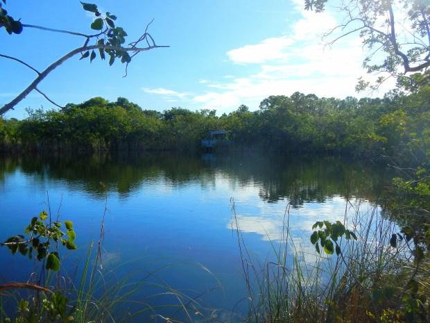 Blue Hole Pond, Key Deer Sanctuary, Big Pine Key, Florida