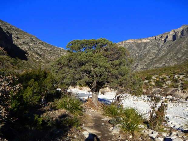 Mouth of McKittrick Canyon, Guadalupe Mountains National Park, Texas