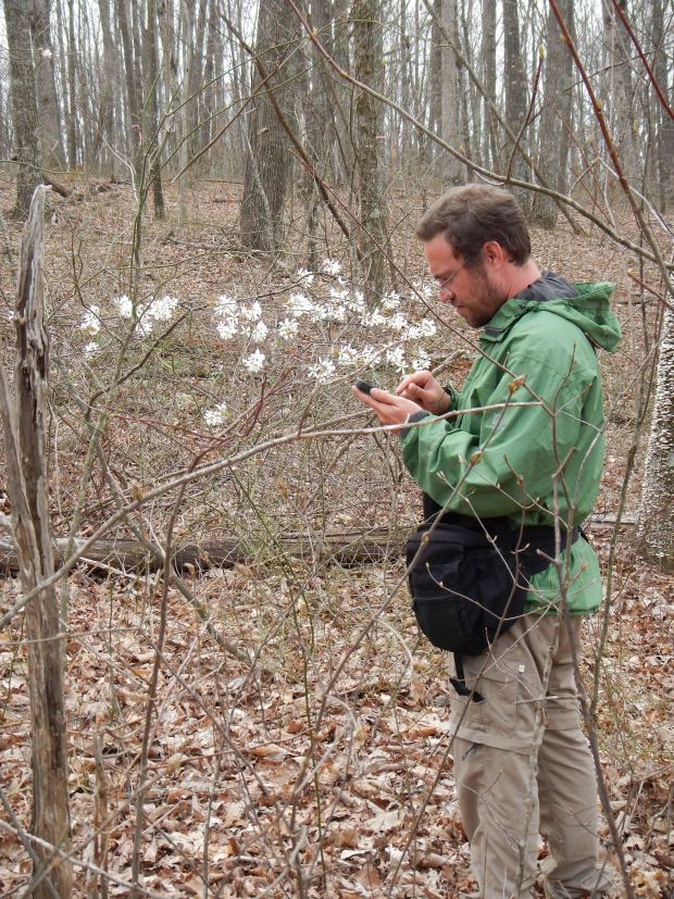 Jonathan recording Service Berry sighting into iNaturalist, Shake Rag Hollow, Perimeter Trail, Sewanee Domain, Tennessee