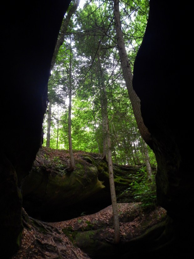 Trees growing through fissures in rock, Yahoo Arch, Big South Fork Recreation Area, Kentucky