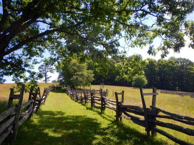 Path between pastures, Hensley Settlement, Cumberland Gap National Historical Park, Kentucky