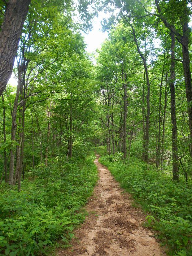 Ridge Trail, Cumberland Gap National Historical Park, Virginia
