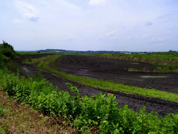 Black dirt, Pine Island, Orange County, New York