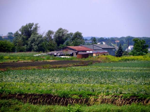 Fields, Black Dirt Country, Orange County, New York