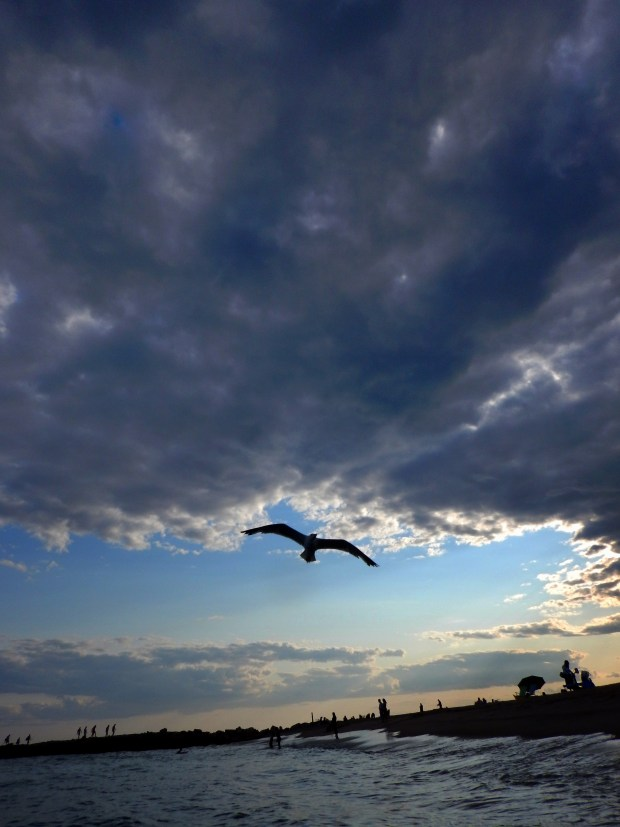 Swooping seagulls, Breachway, Charlestown, Rhode Island