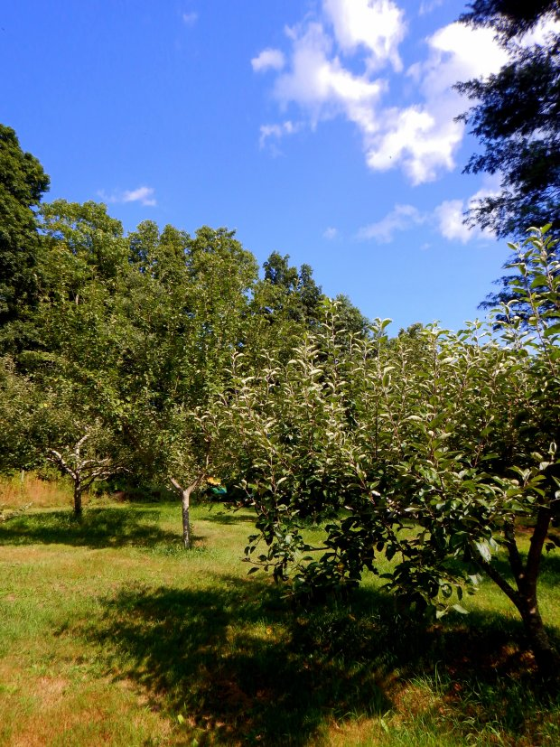 Fruit trees, Stonyledge Farm, Clarks Falls, Connecticut