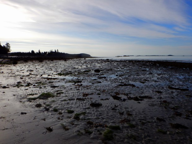 Low tide, Roque Bluffs State Park, Maine