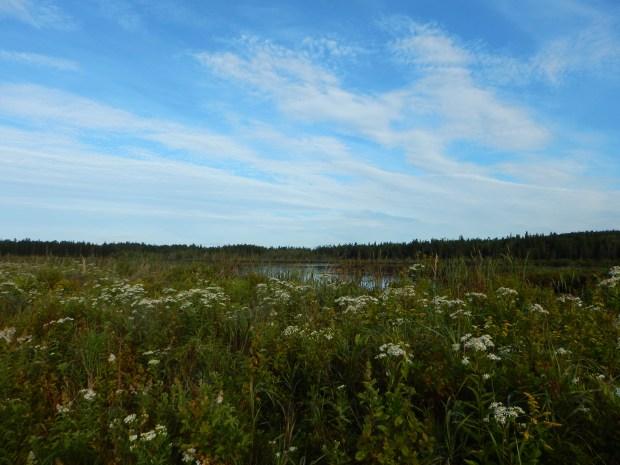 Pond in daylight, Roque Bluffs State Park, Maine