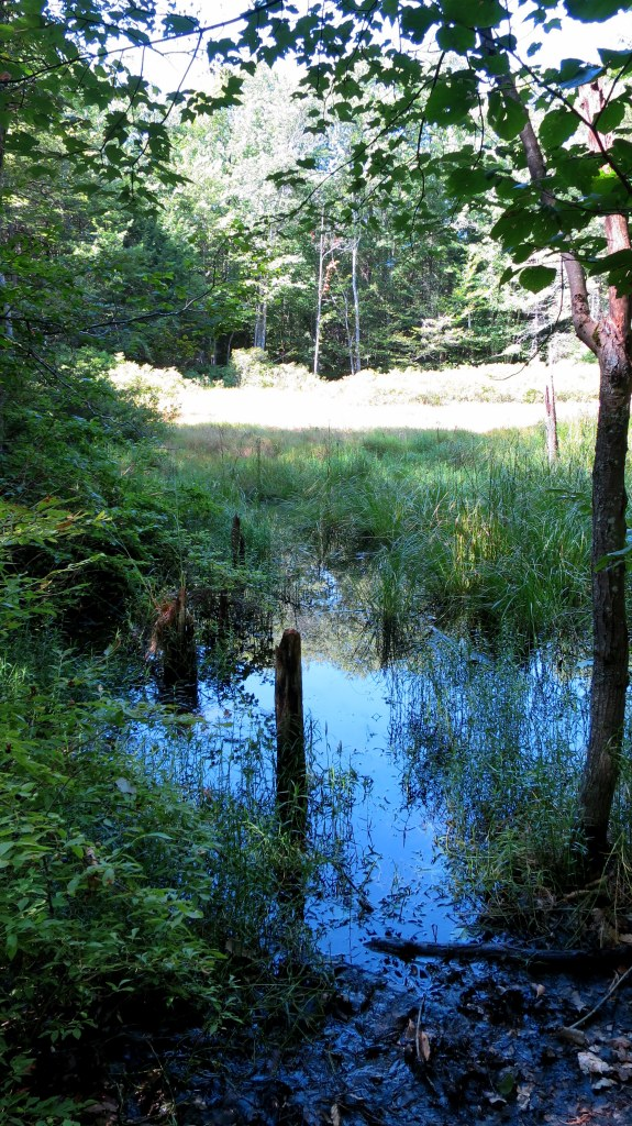 Lovely little swamp, Boundary Trail, Bradbury Mountain State Park, Maine
