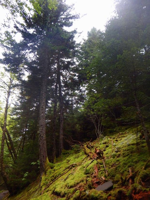 Dickinson Falls  Trail, Fundy National Park, New Brunswick, Canada