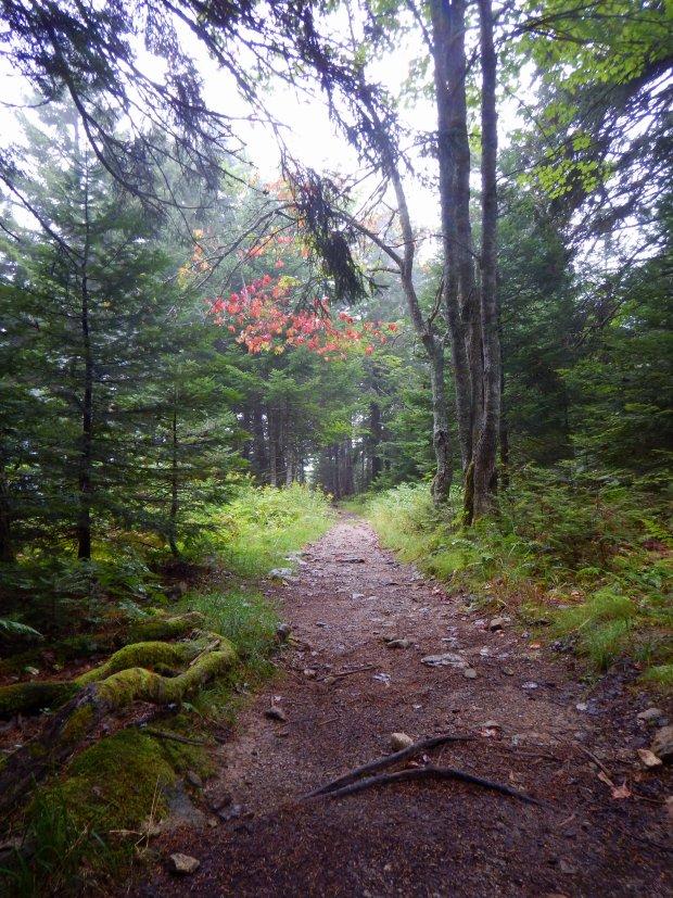 Caribou Plain Trail, Fundy National Park, New Brunswick, Canada