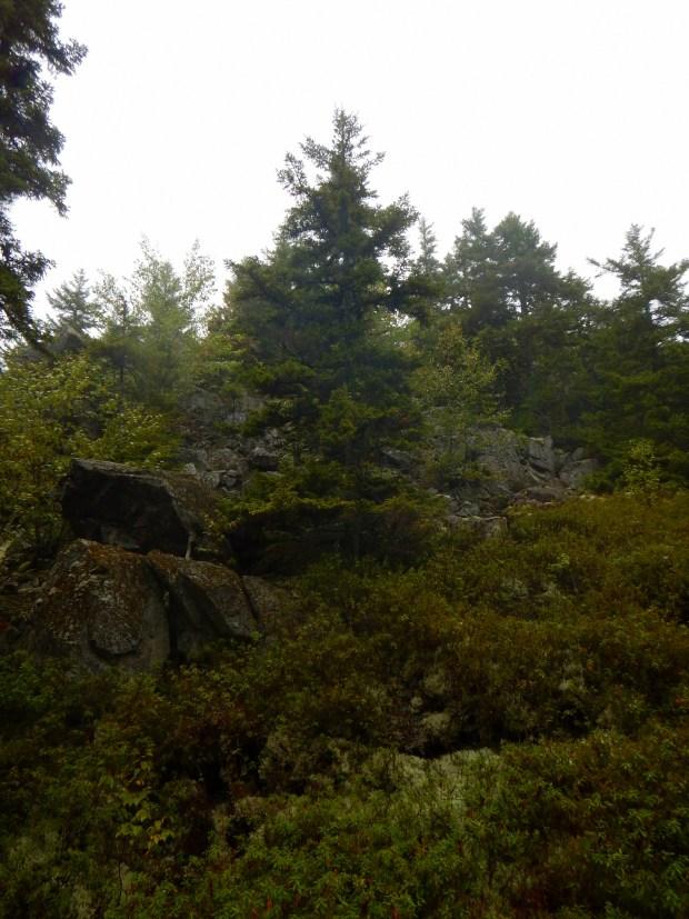Kinnie Book Trail, Fundy National Park, New Brunswick, Canada