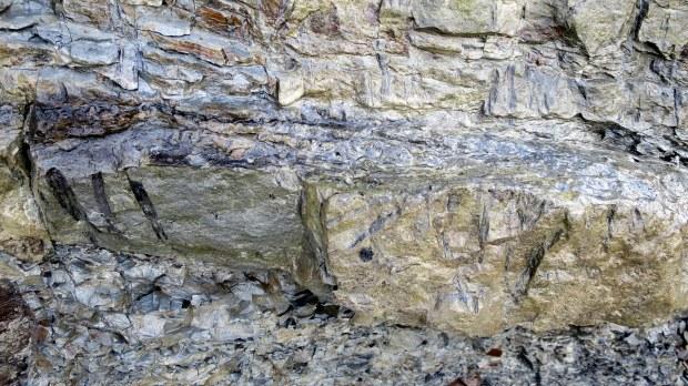 Stigmaria (lepidodendron tree roots), Joggins Fossil Cliffs, Nova Scotia, Canada