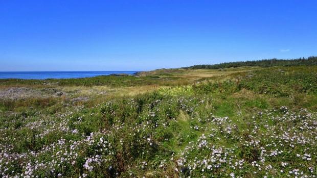 Meadows, Coastal Trail, Brier Island Nature Preserve, Nova Scotia, Canada