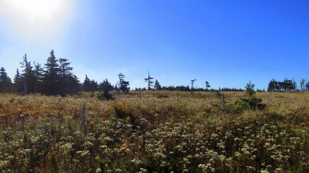 Meadow and sparse spruce stands, Skyline Trail, Cape Breton Highlands National Park, Nova Scotia, Canada