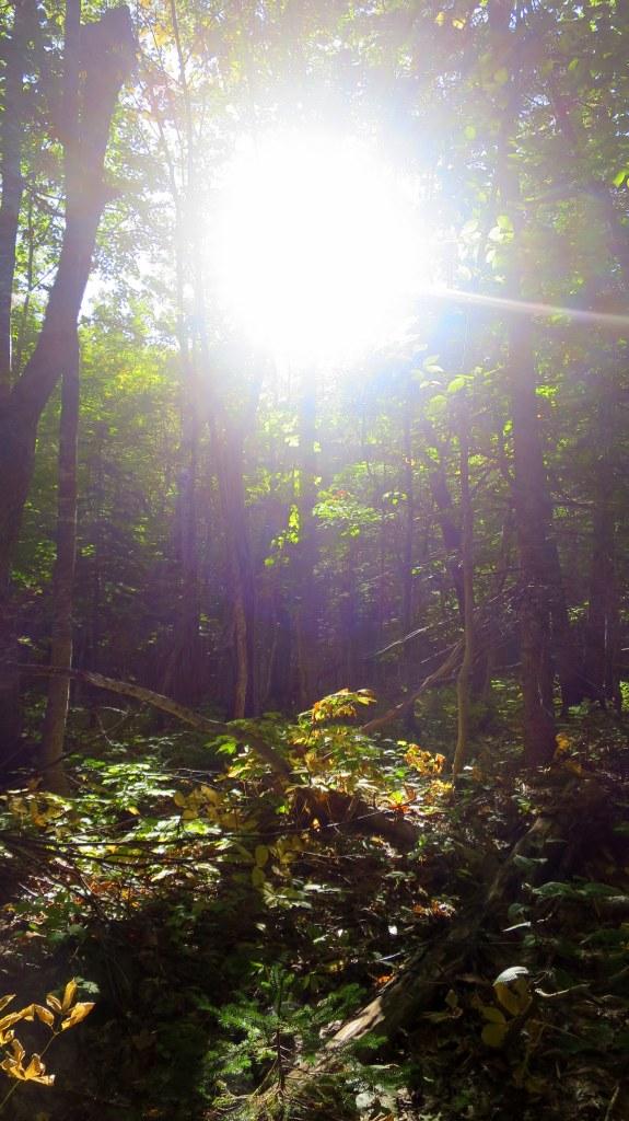 Sun on Aspy Trail, Cape Breton Highlands National Park, Nova Scotia, Canada