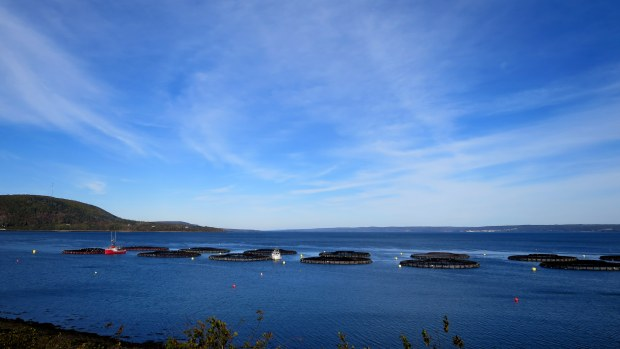Fish farm, Digby, Nova Scotia, Canada