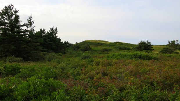 Rolling dunes of Greenwich Beach, Prince Edward Island National Park, Prince Edward Island, Canada