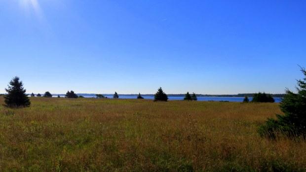 Meadow, Tlaqatik Trail, Greenwich, Prince Edward Island National Park, Prince Edward Island, Canada