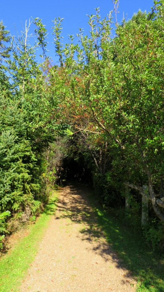 Tlaqatik Trail turning inland towards forest, Greenwich, Prince Edward Island National Park, Prince Edward Island, Canada