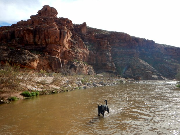 Walking upstream in the Virgin River, Virgin River Canyon Recreation Area, Arizona