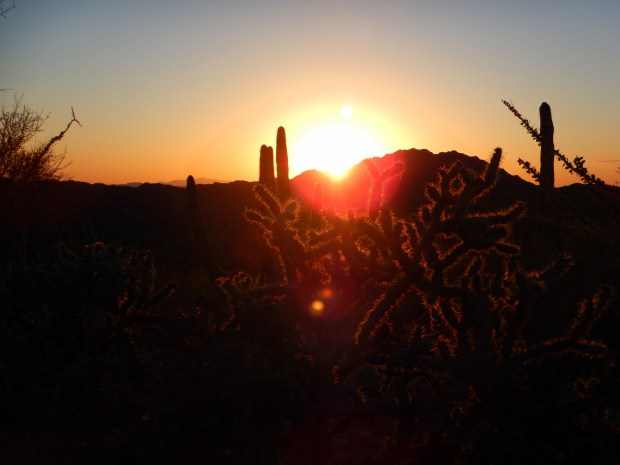 Sunset, Desert View Trail, Organ Pipe Cactus National Monument, Arizona