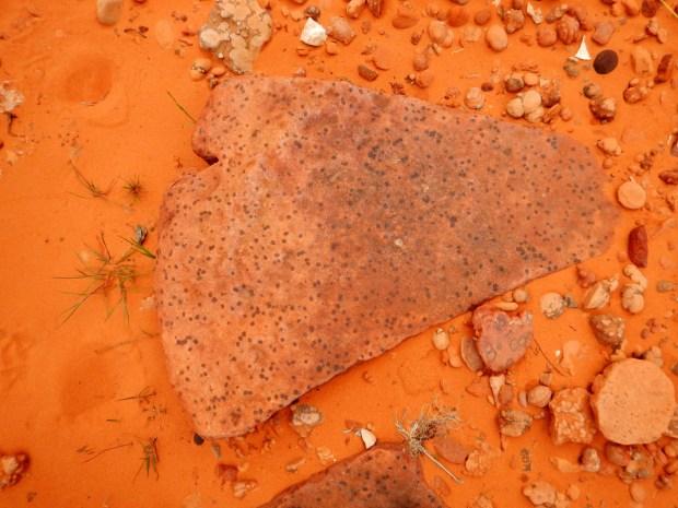 Polka dot pattern in sandstone, Red Cliffs National Conservation Area, Utah