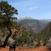 Hiking In the Mountains Around Cedar City
