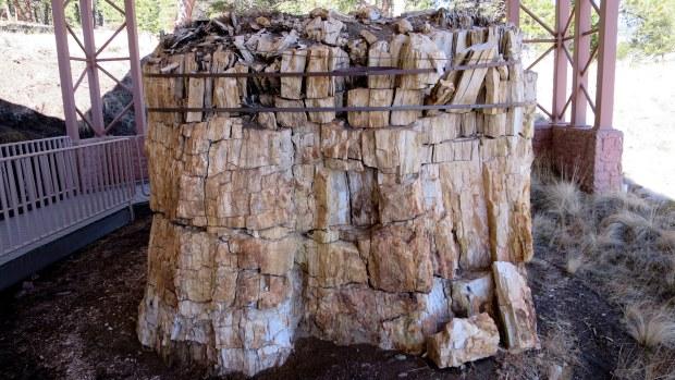 Petrified redwood stumps, Florissant Fossil Beds National Monument, Colorado
