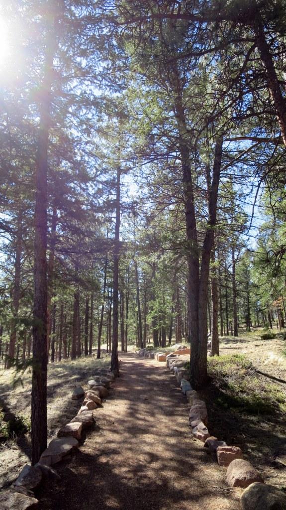 Ponderosa Loop Trail, Florissant Fossil Beds National Monument, Colorado