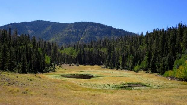 Yellow meadows in Fishlake National Forest, Utah