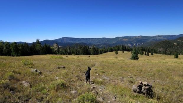 Meadow on Rattlesnake Creek Trail, Ashdown Gorge Wilderness, Utah