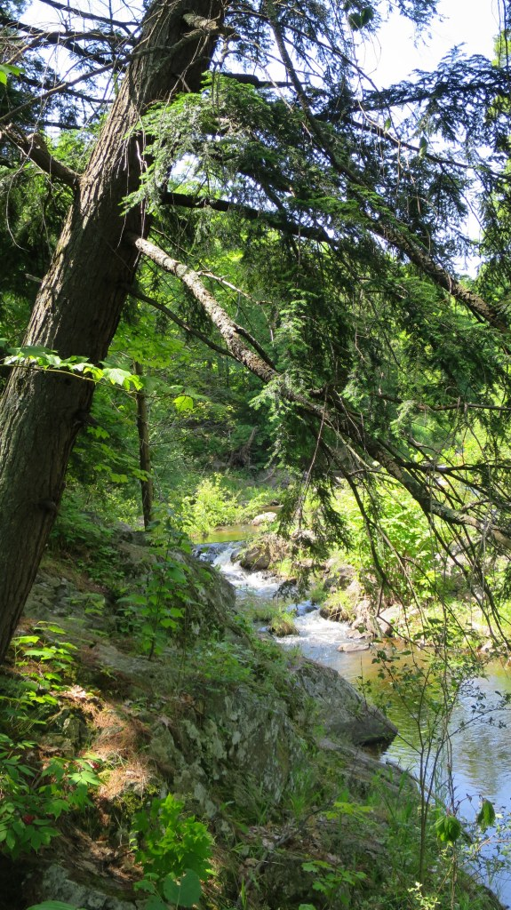Trail to a waterfall that I completely forgot the name of, Marquette, Michigan