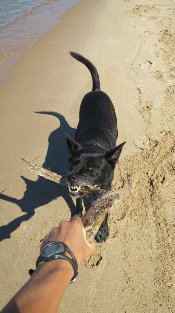 I convince Abby to play by animating a stick, Lake Superior Beach off Route 28, Michigan