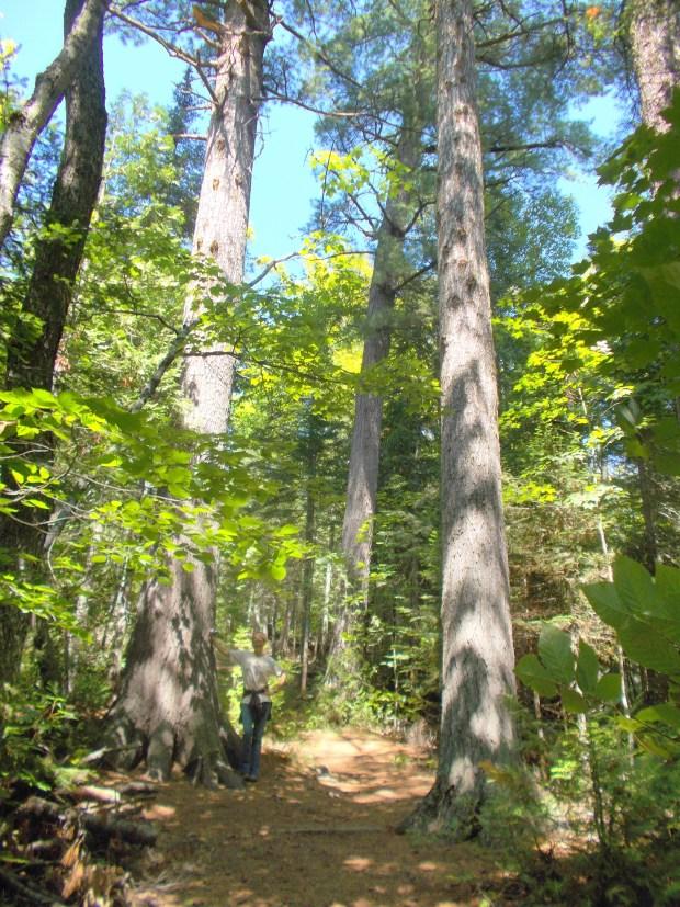 My turn to pose, Estivant Pines Sanctuary, Michigan