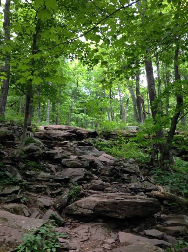 Rocks along North Mountain Trail, Catskills, New York